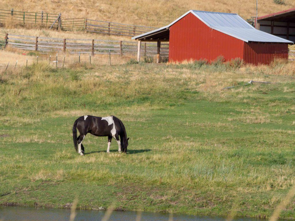 Carnet d'Amérique - Une ferme en Oregon