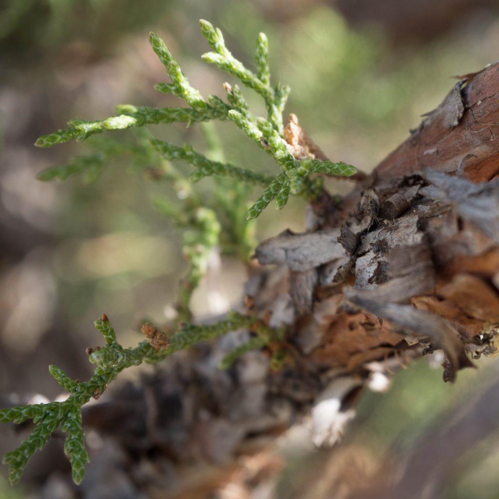 Un Jour de Neige - Carnet d'Amérique - végétation en Oregon