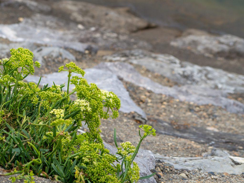 Défis photo en vacances - Défi no 49 : le cadrage en coin - plante de muraille