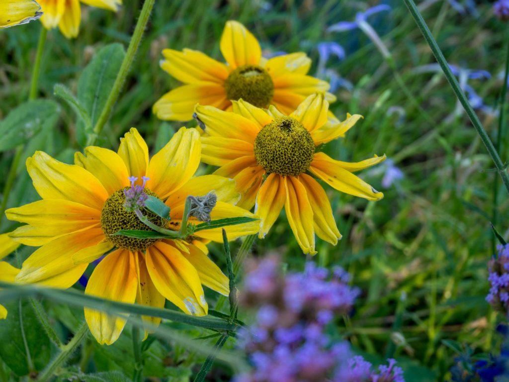 Un Jour de Neige - Futuroscope : les jardins - août 2018