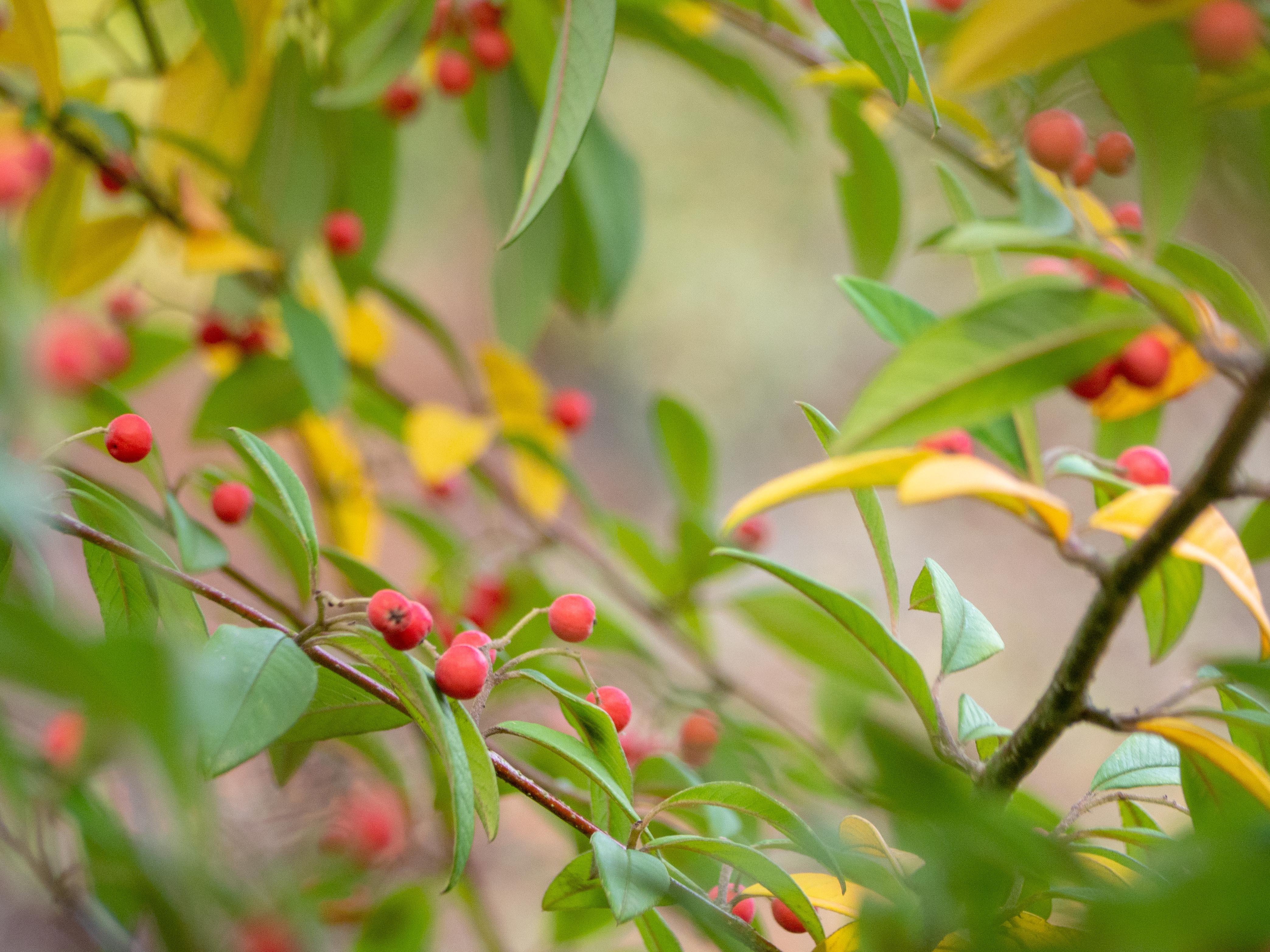 Un Jour de Neige - L'automne au jardin