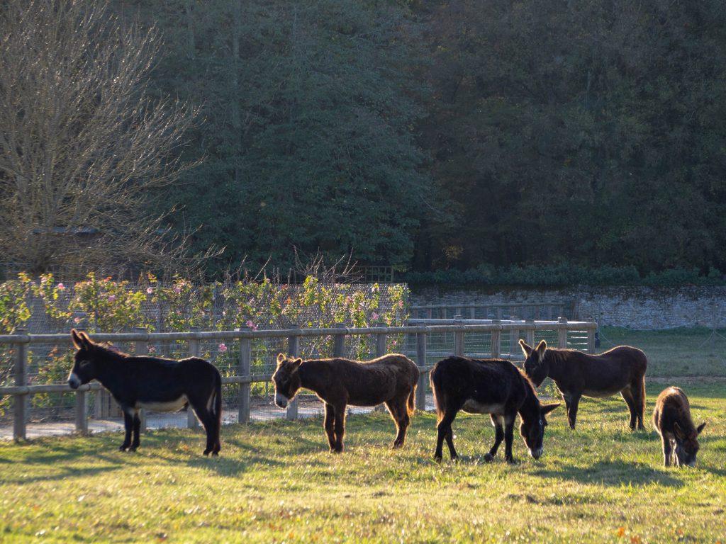 Château de Chenonceau - le pré aux ânes - Un Jour de Neige