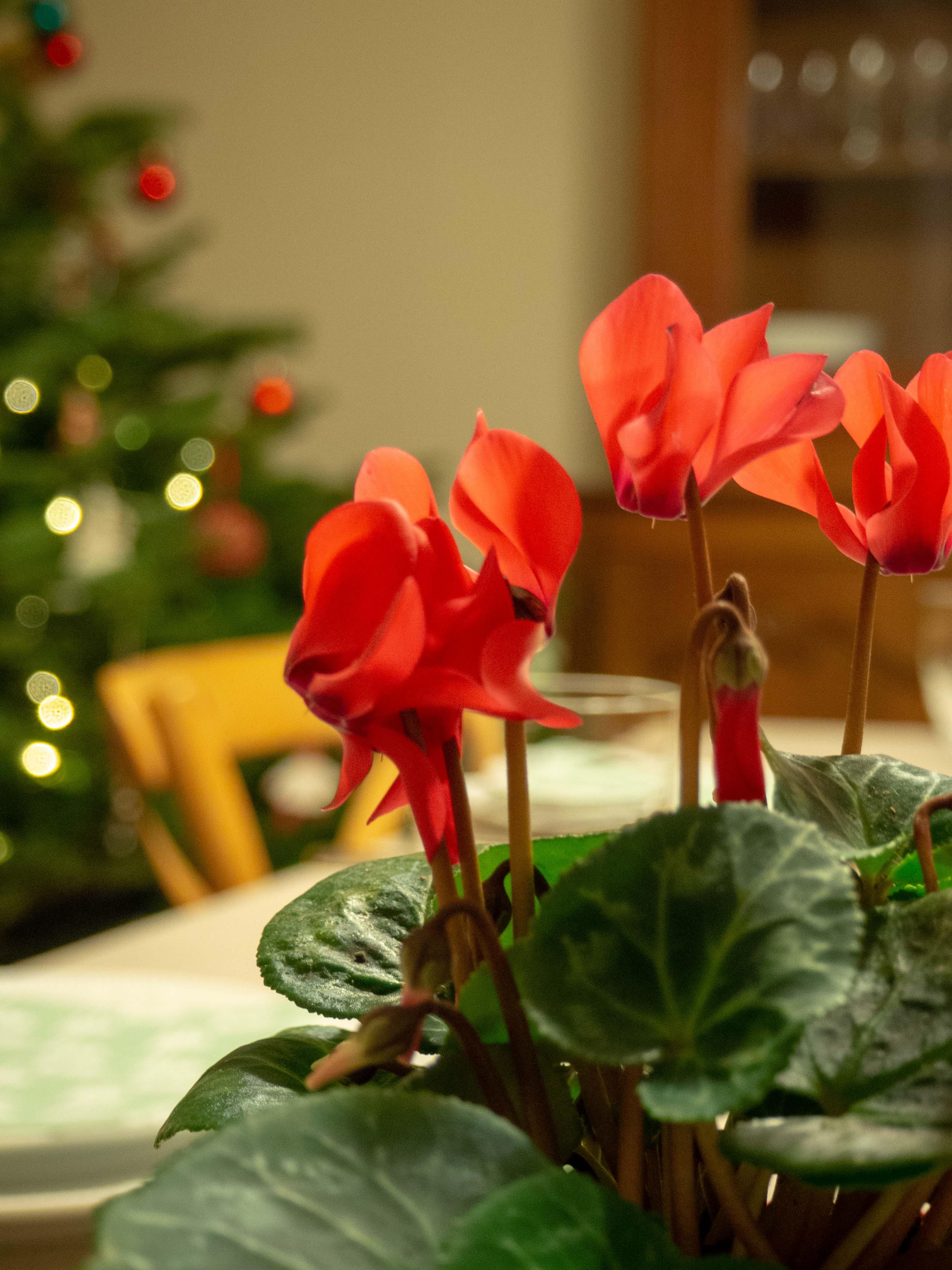 Table de Noël - Un Jour de Neige