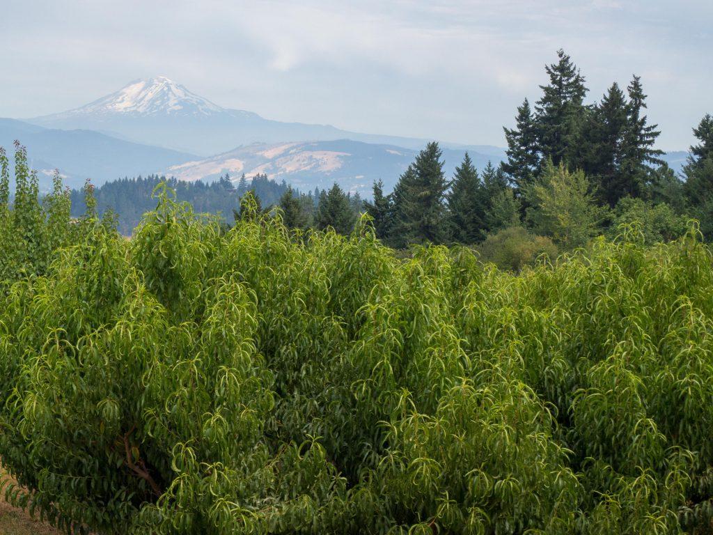 Un Jour de Neige - Carnet d'Amérique - Oregon