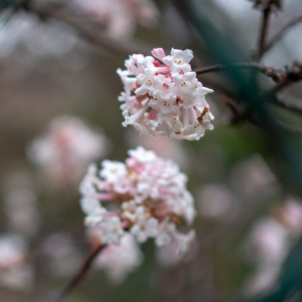 Une journée au Jardin des Plantes - Un Jour de Neige