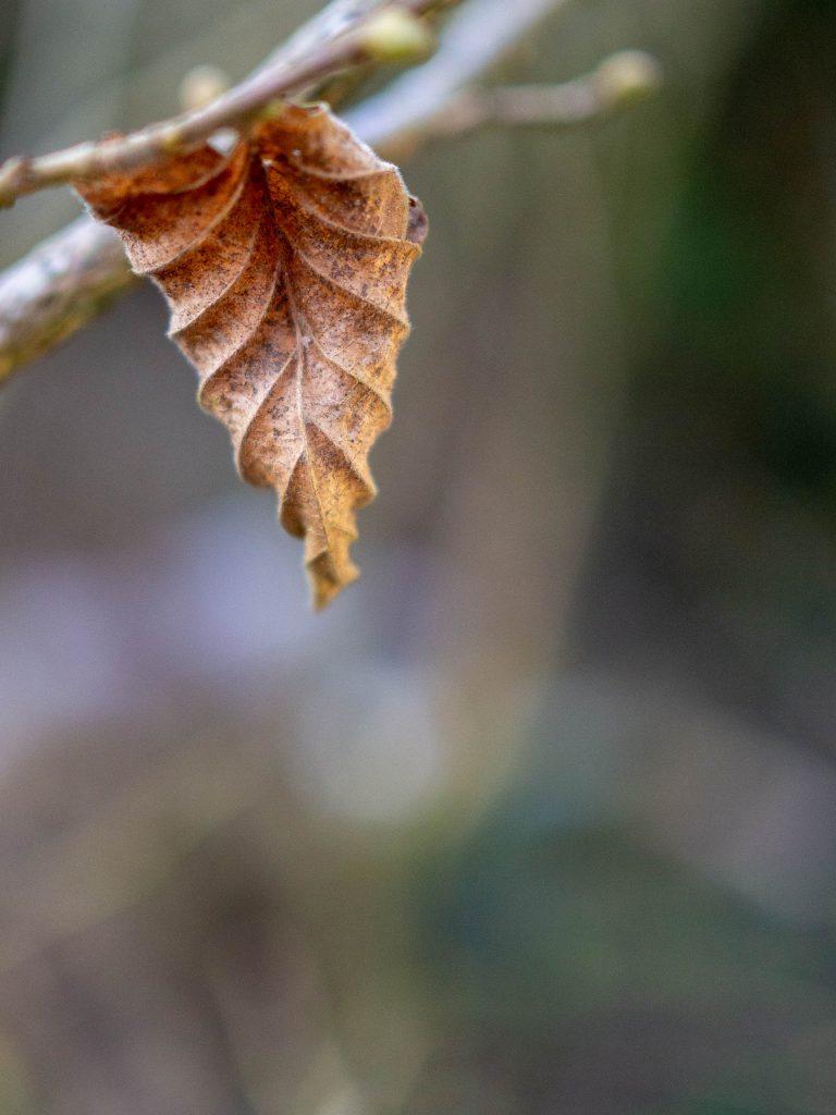 Un Jour de Neige - Le jardin, entre hiver et printemps