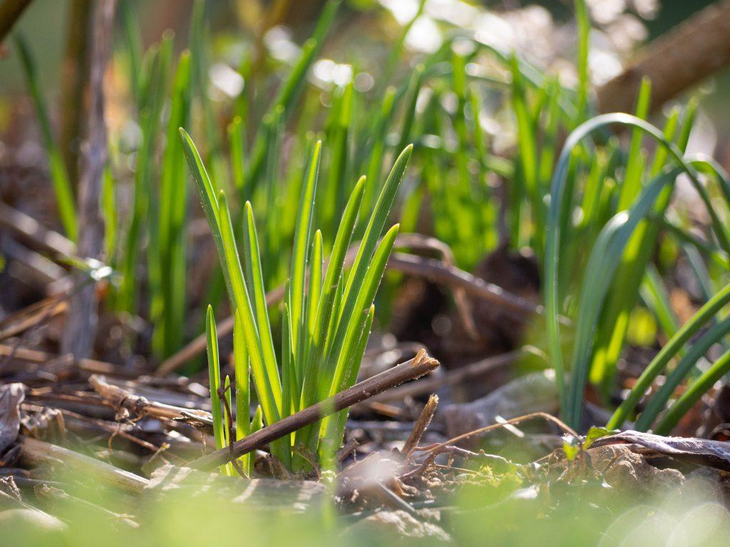 Un Jour de Neige - l'arrivée du printemps