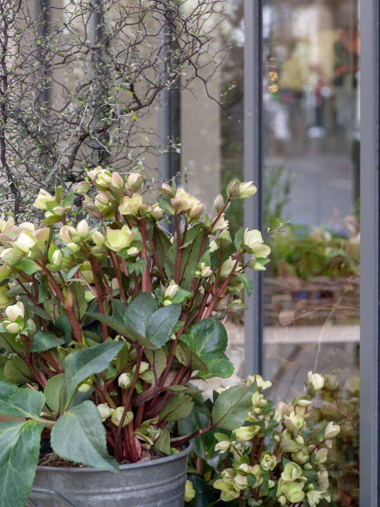 Un Jour de Neige - Fleuriste dans le 5e arrondissement