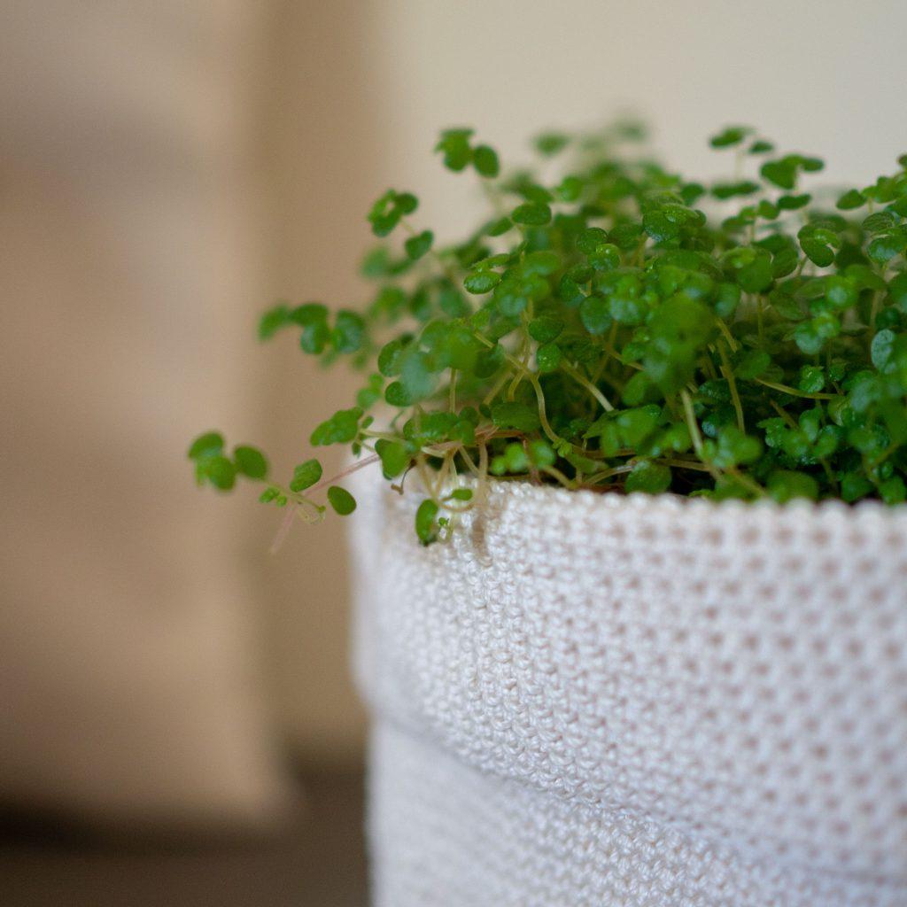 Un Jour de Neige - Petite plante de printemps