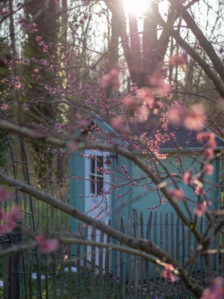 Un Jour de Neige - La cabane derrière le pêcher en fleurs
