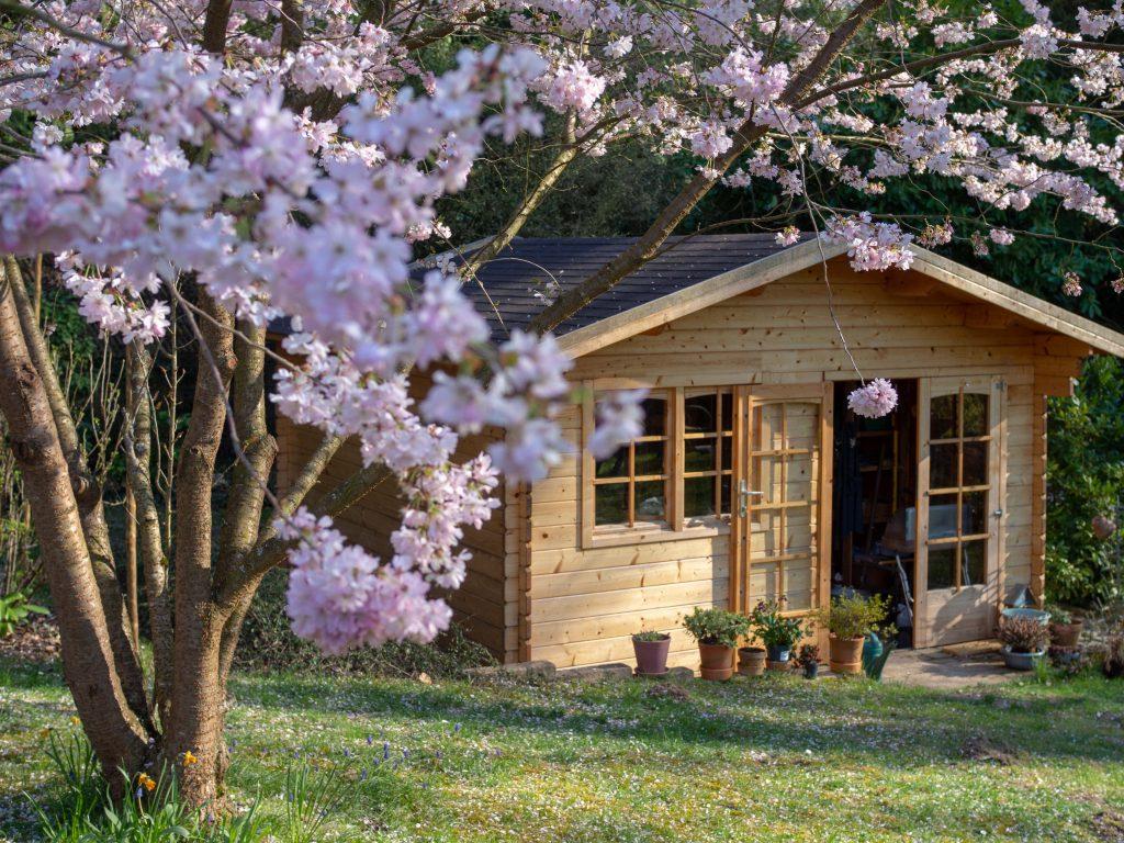 Cerisier en fleurs - Un Jour de Neige