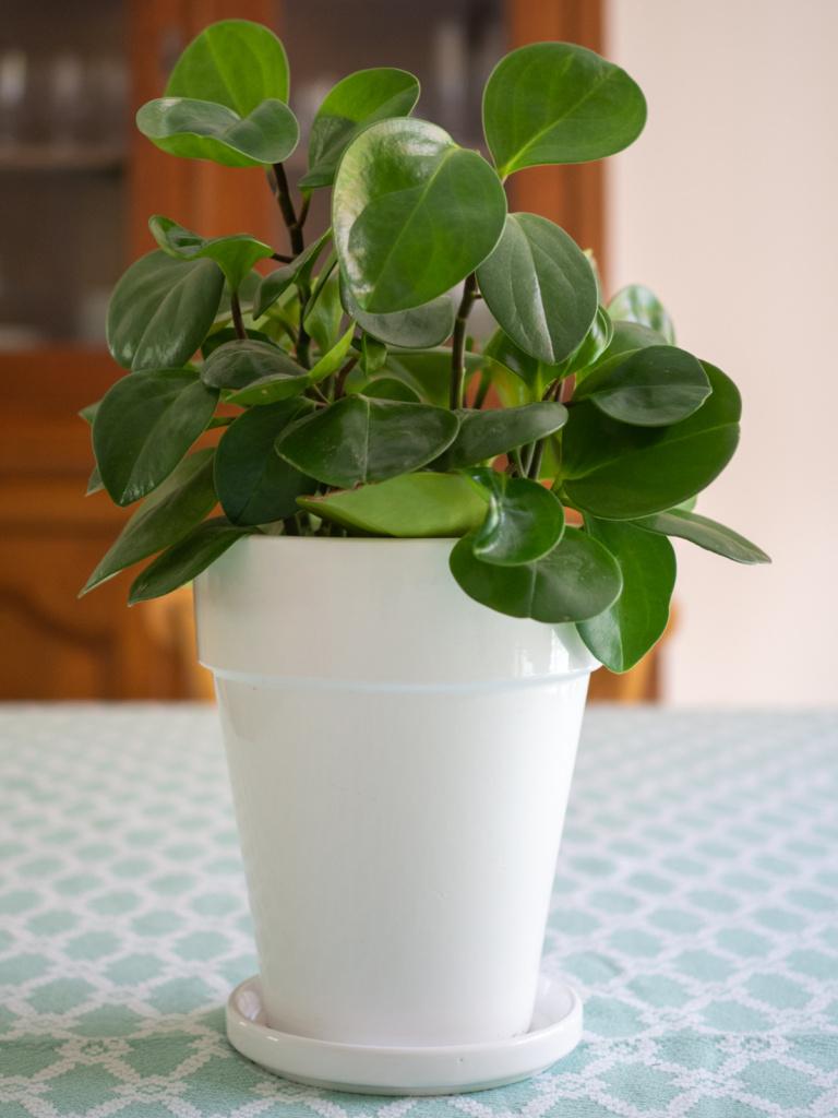 Plante addict (Un Jour de Neige - Carnet du dimanche)