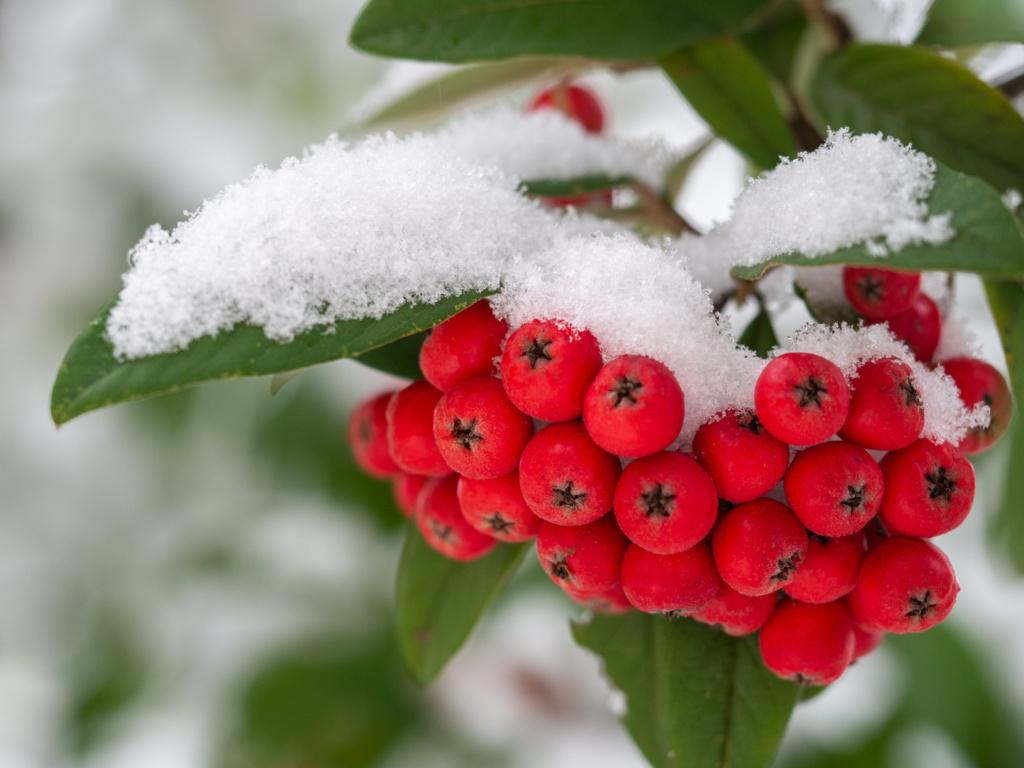 Projet photo 365 - sous la neige