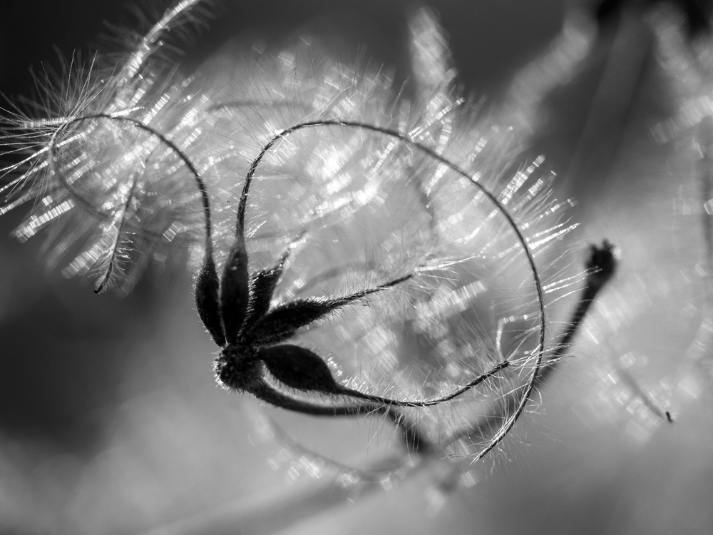 Un Jour de Neige - Projet photo 365 - mars 2021